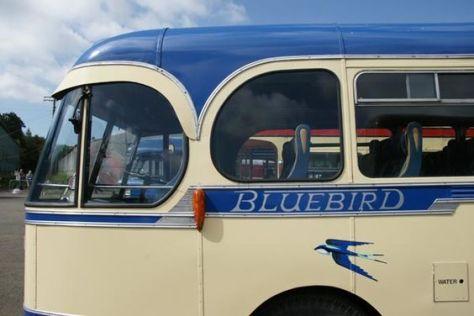 Bluebird (Bruce Peter)